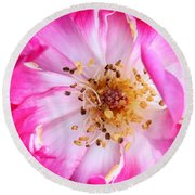 Pretty In Pink Rose Close Up Round Beach Towel