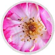 Pretty In Pink Rose Close Up Round Beach Towel