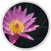 Pretty Pink And Yellow Water Lily Round Beach Towel