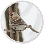 Pretty Redpoll Round Beach Towel