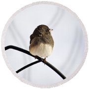Pretty Winter Junco Round Beach Towel by Christina Rollo