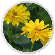 Pretty Yellow False Sunflowers In Bloom Round Beach Towel