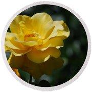 Pretty Yellow Rose Blossom Round Beach Towel