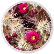 Prickley Cactus Plants Round Beach Towel
