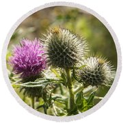 Prickly Youth Round Beach Towel