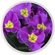 Primrose Purple Round Beach Towel