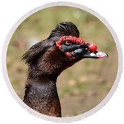 Profile Of A Brown Muscovy Duck Round Beach Towel