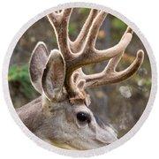 Profile Of Mule Deer Buck With Velvet Antler  Round Beach Towel