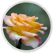 Profile View Yellow And Pink Rose Round Beach Towel