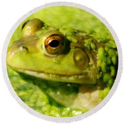 Profiling Frog Round Beach Towel by Optical Playground By MP Ray