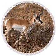 Pronghorn Antelope 2 Round Beach Towel