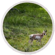 Pronghorn Antelope Among Wildflowers Round Beach Towel