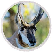 Pronghorn Antelope Portrait Round Beach Towel