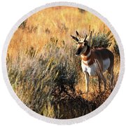 Pronghorn Buck Round Beach Towel