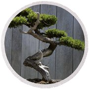 Prostrate Juniper Bonsai Tree Round Beach Towel