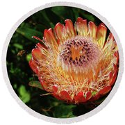 Protea Flower 2 Round Beach Towel