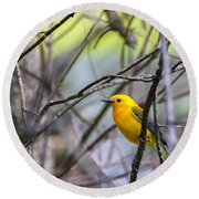 Prothonotary Warbler Round Beach Towel