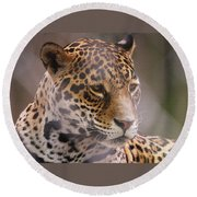 Out Of Africa Round Beach Towel