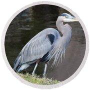 Proud Great Blue Heron Round Beach Towel