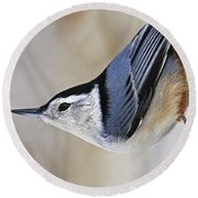 Proud Nuthatch... Round Beach Towel