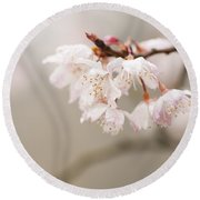 Prunus Hirtipes Round Beach Towel