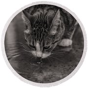 Puddle Drinking Kitty Round Beach Towel