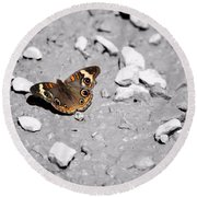 Puddling Butterfly 8766 Round Beach Towel