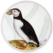 Puffin, Marmon Fratercula, Circa 1840 Round Beach Towel