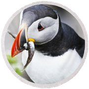 Puffin With Fish Round Beach Towel