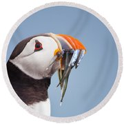 Puffin With Sandeels Portrait Round Beach Towel
