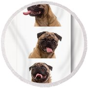 Pug Photo Booth Round Beach Towel