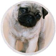 Pug Puppy Dog Round Beach Towel
