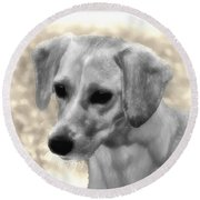 Puggles Round Beach Towel by Bill Cannon