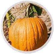 Pumpkin Growing In Pumpkin Field Round Beach Towel