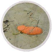 Pumpkin In The Sand Round Beach Towel