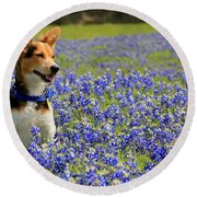 Pup In The Bluebonnets Round Beach Towel