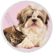 Puppy And Kitten Round Beach Towel by Greg Cuddiford
