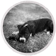 Puppy Eyes In Black And White Round Beach Towel