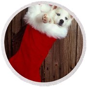 Puppy In Christmas Stocking Round Beach Towel