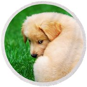 Puppy Love Round Beach Towel by Christina Rollo