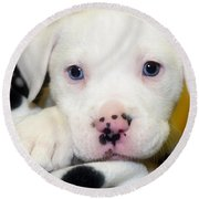 Puppy Pose With 4 Spots On Nose Round Beach Towel