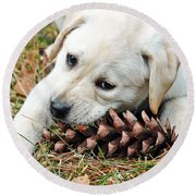 Puppy With Pine Cone Round Beach Towel