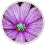 Purple African Daisy Round Beach Towel