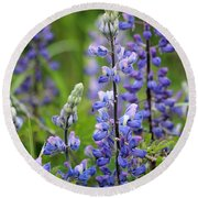 Purple Alaskan Lupines Round Beach Towel