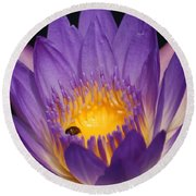 Purple And Bright Yellow Center Waterlily... Round Beach Towel