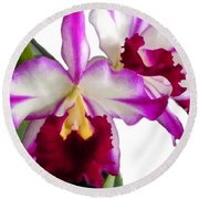 Purple And White Cattleyas Against White Space Round Beach Towel