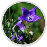 Purple Balloon Flower Round Beach Towel