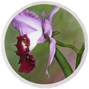 Purple Cattleya Orchid In Profile Round Beach Towel