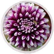 Purple Dahlia White Tips Round Beach Towel