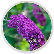 Butterfly Bush Garden Flower Round Beach Towel